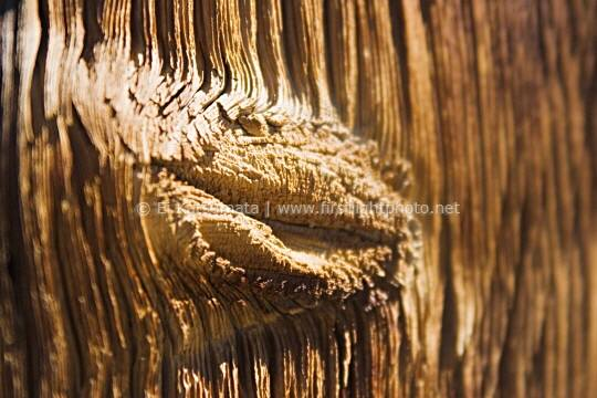 Detail in weathered wood that resemle human lips, Bodie State Park, California, United States of America
