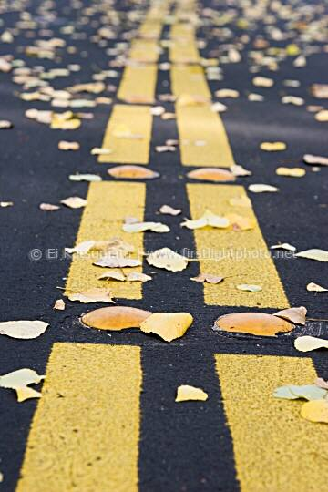 Autumn leaves and double yellow line on road