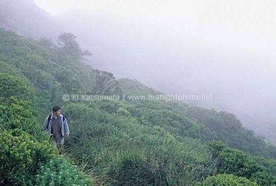 A young Asian man hiking through foggy coastal scrub, San Bruno Mountain State Park, California, United States of America