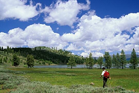 A young man hiking through a lakeside meadow at Stampede Reservoir, Tahoe National Forest, California, United States of America