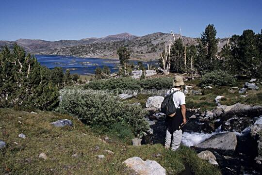 Flyfisherman on a tributary stream above Thousand Island Lake in the Ansel Adams Wilderness Area, Sierra Nevada, California, United States of America