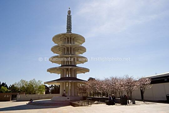 Peace pagoda and cherry blossoms at Peace Plaza in Japantown, San Francisco, California, United States of America