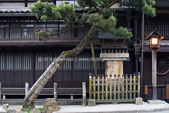 Pine tree and lamp in front of a traditional Japanese building, Takayama, Gifu Prefecture, Japan