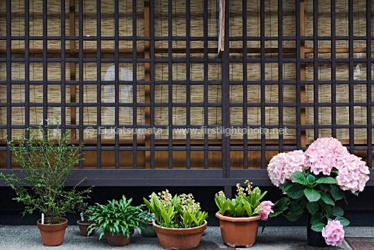 Potted plants in front of a traditional building in the Historic District of Takayama, Japan