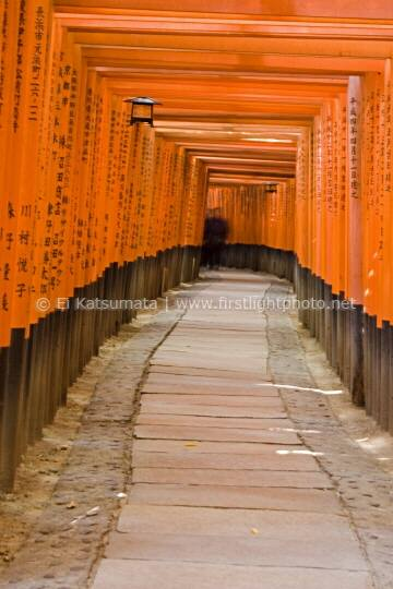 Torii gates line the walking paths at Fushimi Inari Shrine, Kyoto, Kansai Region, Japan