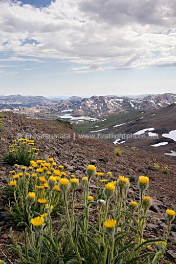 Wildflowers on the slopes of Big Sam with Emigrant Meadow Lake in the distance, Emigrant Wilderness Area, California
