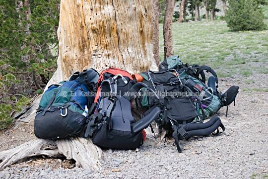 Backpacks leaning againts a tree at Leavitt Lake, Toiyabe National Forest, California